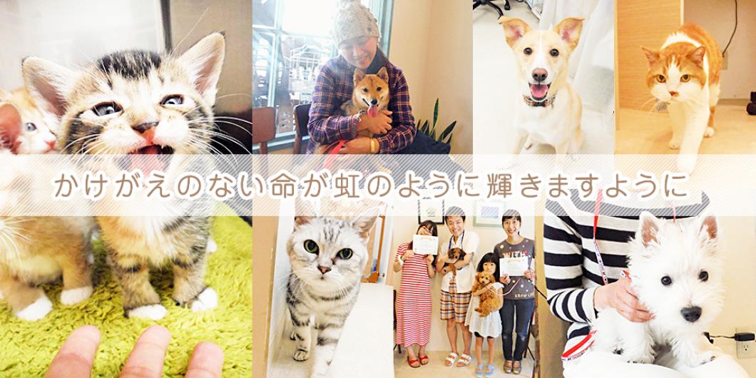 文京区のなないろ動物病院 スタッフブログ